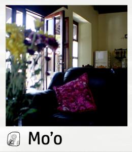 01-Moo